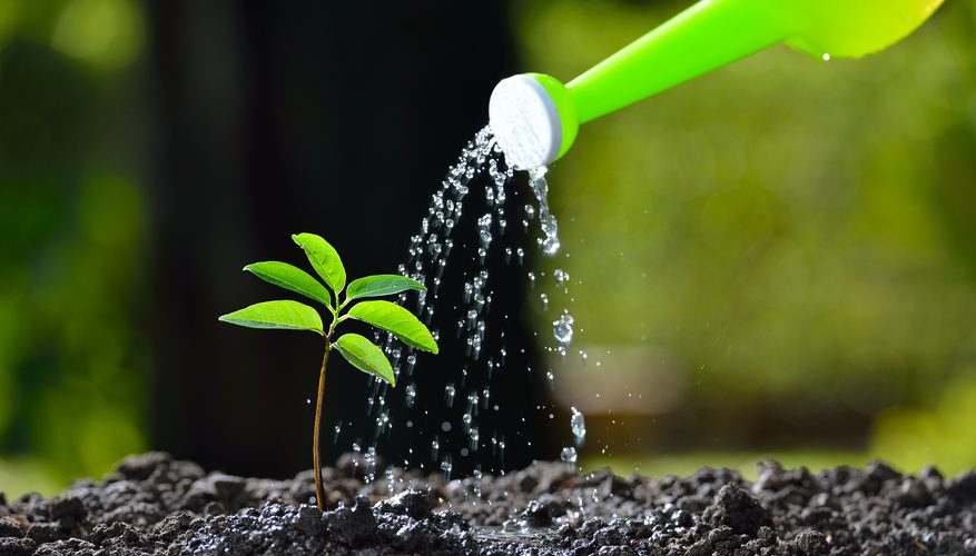 Are You Watering The Plants In a Right Way?