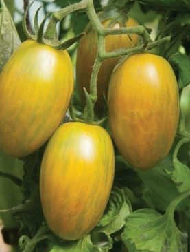 Tomato Seed Green Tiger 20-seeds
