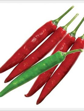 hot pepper Bright Green & Bright Red (VERY HIGH YIELD)
