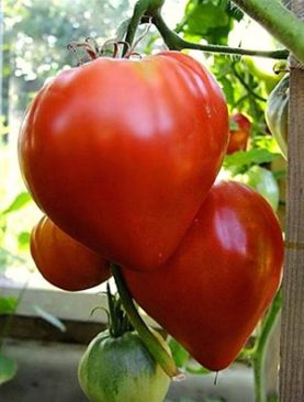Oxheart Tomato Approx: 25 seeds