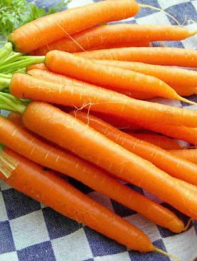 Carrot Light Orange