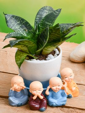 Wish Happiness with Super Sansevieria in a Ceramic pot