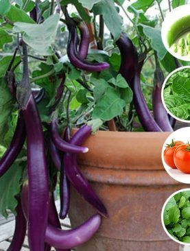Best Vegetable Seeds to Sow in December in Pakistan- (5 Seeds Pack)
