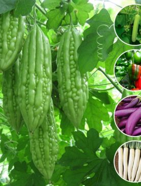 Best Vegetable Seeds to Sow in January in Pakistan