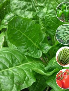 Best Vegetable Seeds to Sow in March in Pakistan