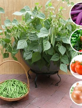 Best Vegetable Seeds to Sow in May in Pakistan - (5 Seeds Pack)