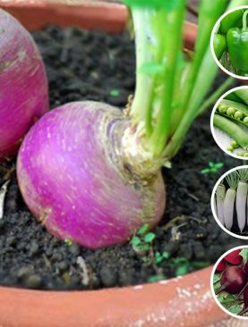 Best Vegetable Seeds to Sow in November in Pakistan - (5 Seeds Pack)