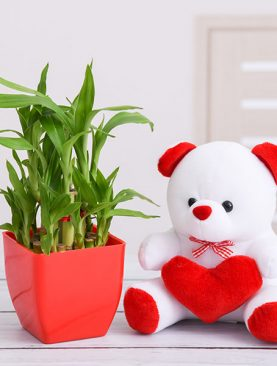 Surprise Your Loved One With 3 Layer Lucky Bamboo And Teddy
